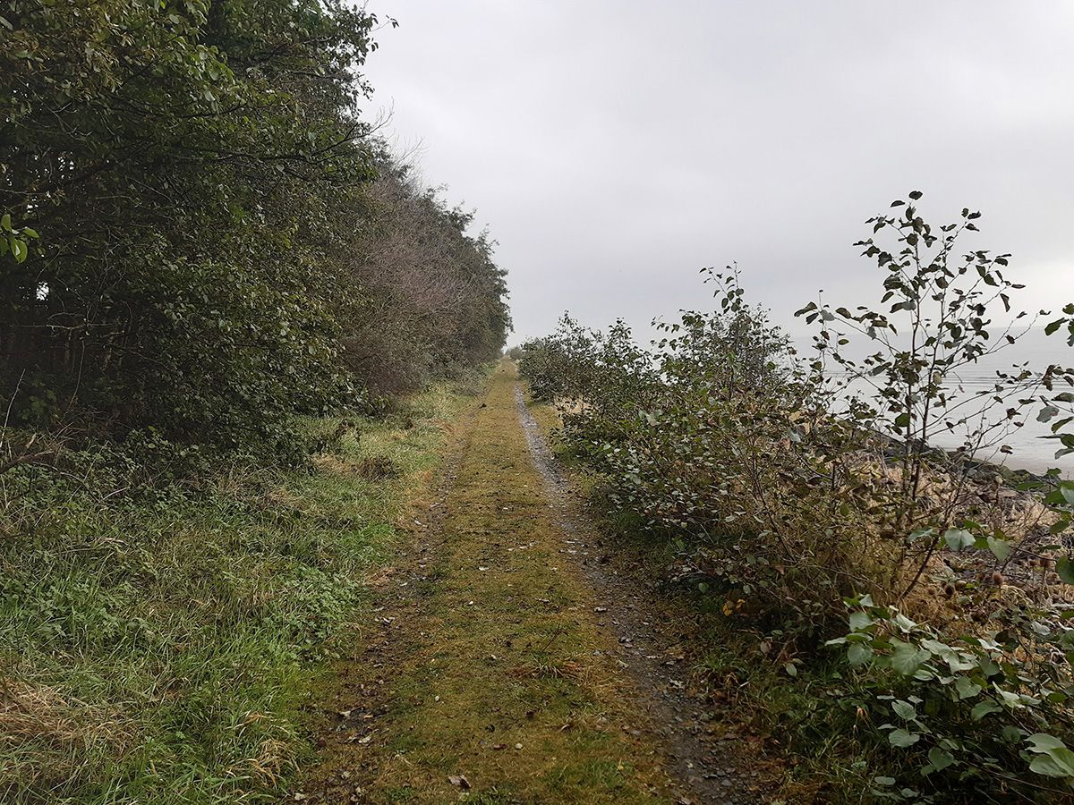 A PATH LESS TRAVELLED: On the shore of Belfast Lough is an oasis of wildlife and birldlife, but how long will it last?