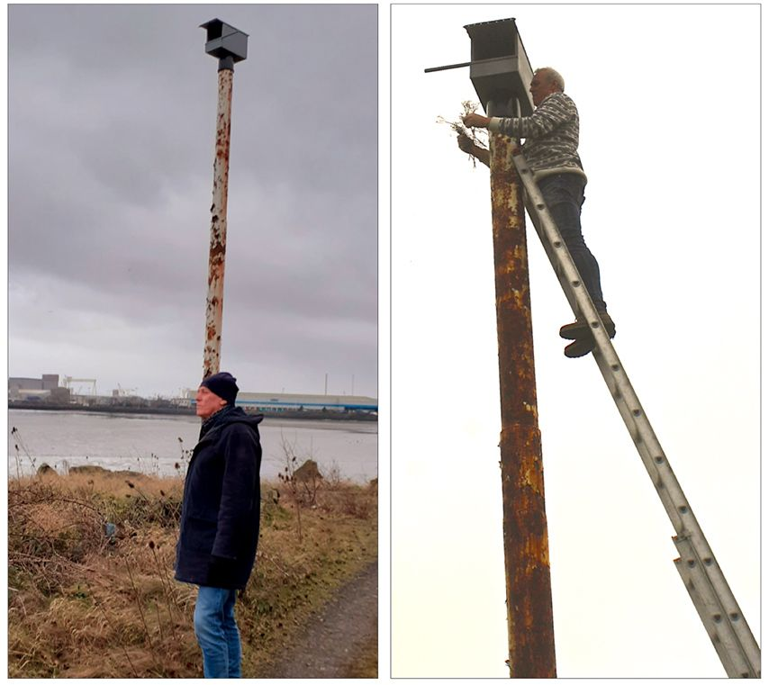 HIGHRISE LIVING:Andy Graham gazes back across the sea from Belfast Lough after filling the Kestrel bird box with thistle