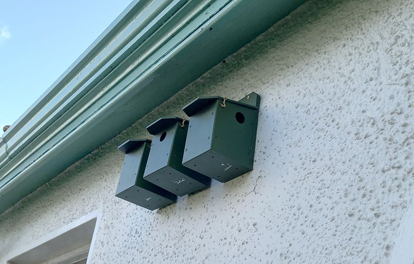 VIEWING BY APPOINTMENT ONLY:The house sparrow boxes are up; below, a male house sparrow
