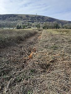PROGRESS? The devastated hedgerow and, below the St Pat's cedar