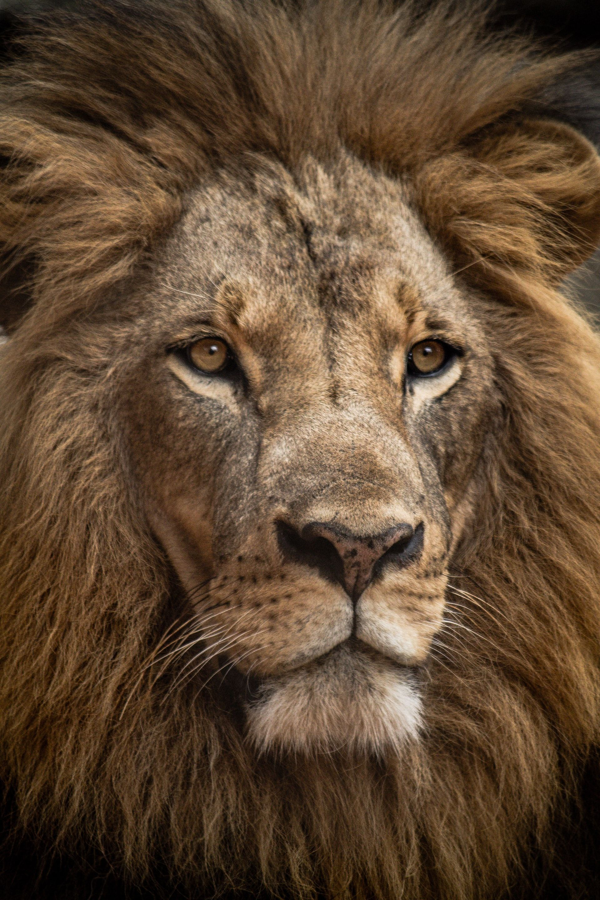 YOU ARE PERFECT: Listen to the lion within