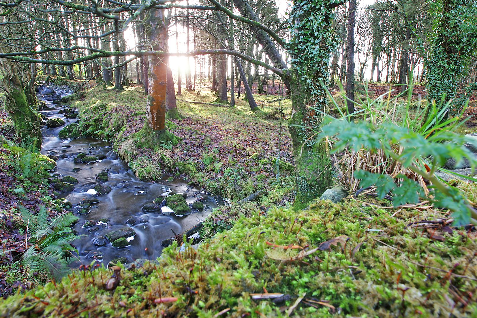 BACK TO THE FUTURE: Restorify has ambitious plans to bring back our forests