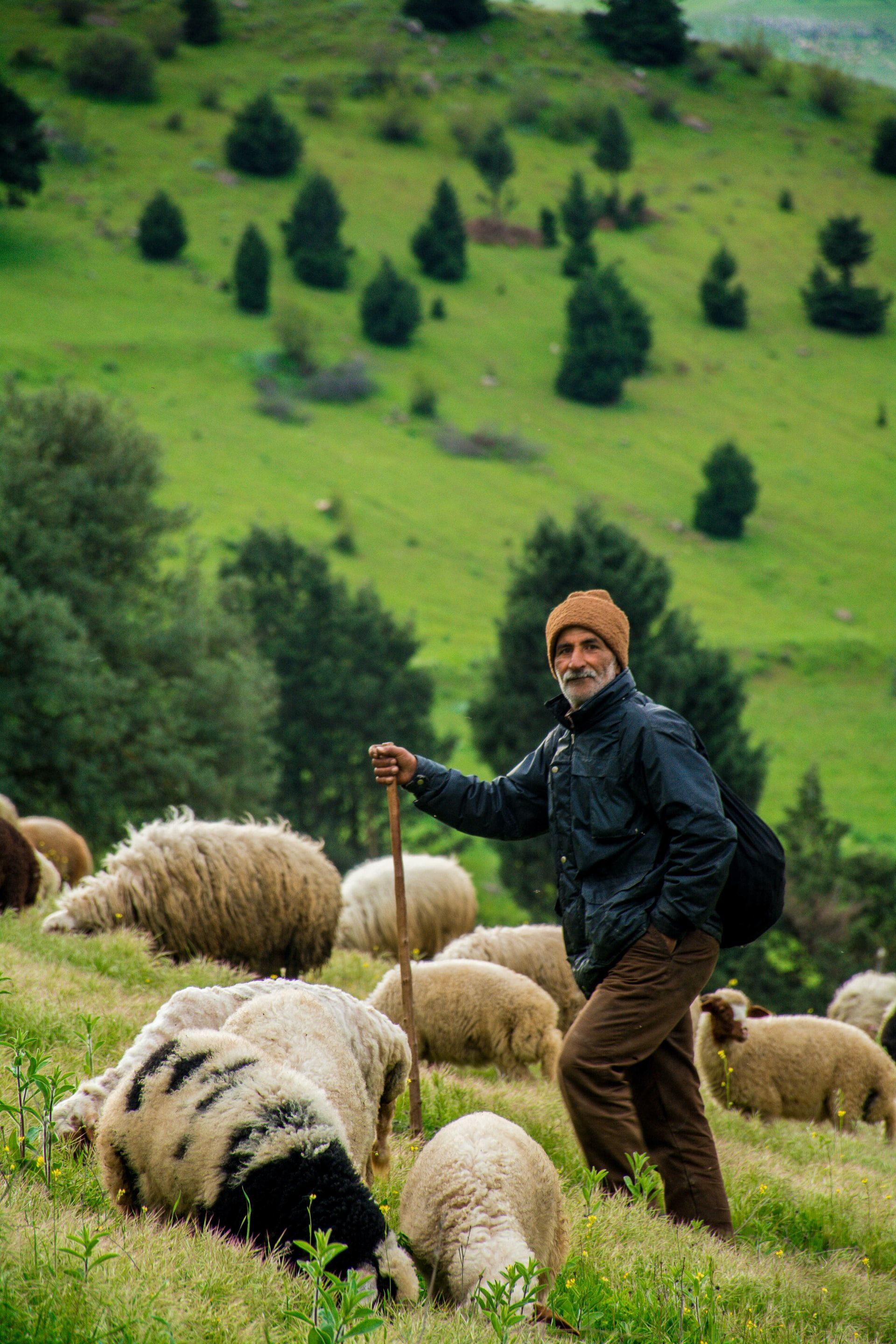 NO ONE LEFT BEHIND: The story of the shepherd leaving his flock to find one lost sheep doesn\'t make sense, unless you are the \'one\'. A shepherd in Gilan Province, Iran.
