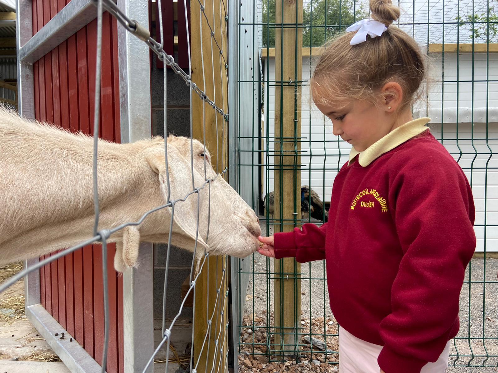 DOWN ON THE FARM: Little Connla Doherty feeding the goats at St James\' Community Farm