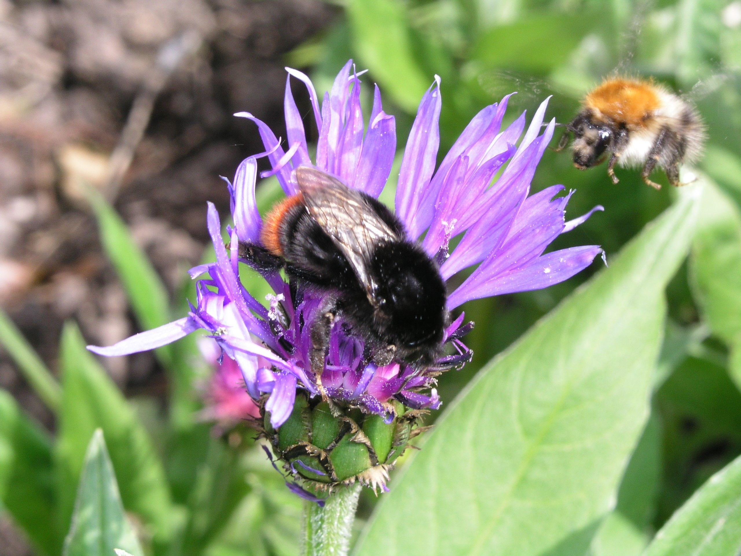 A BUZZ IN THE AIR: It's exciting to know that more and more people are doing what they can to encourage pollinators and the All-Ireland Pollinator Plan (below) is helping spread an important message