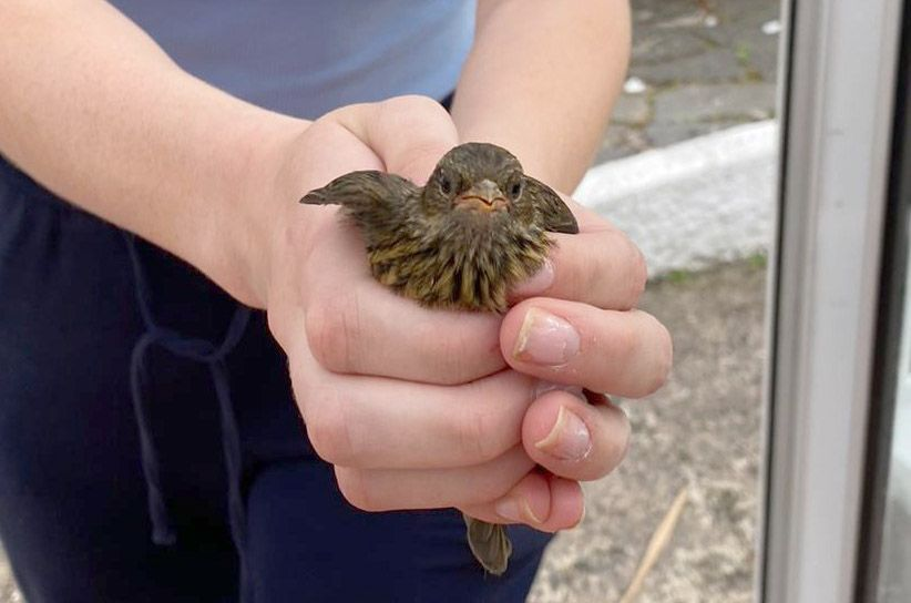 BIRDS GALORE: The wee dunnock looks a bit bemused to be carried from the kitchen.