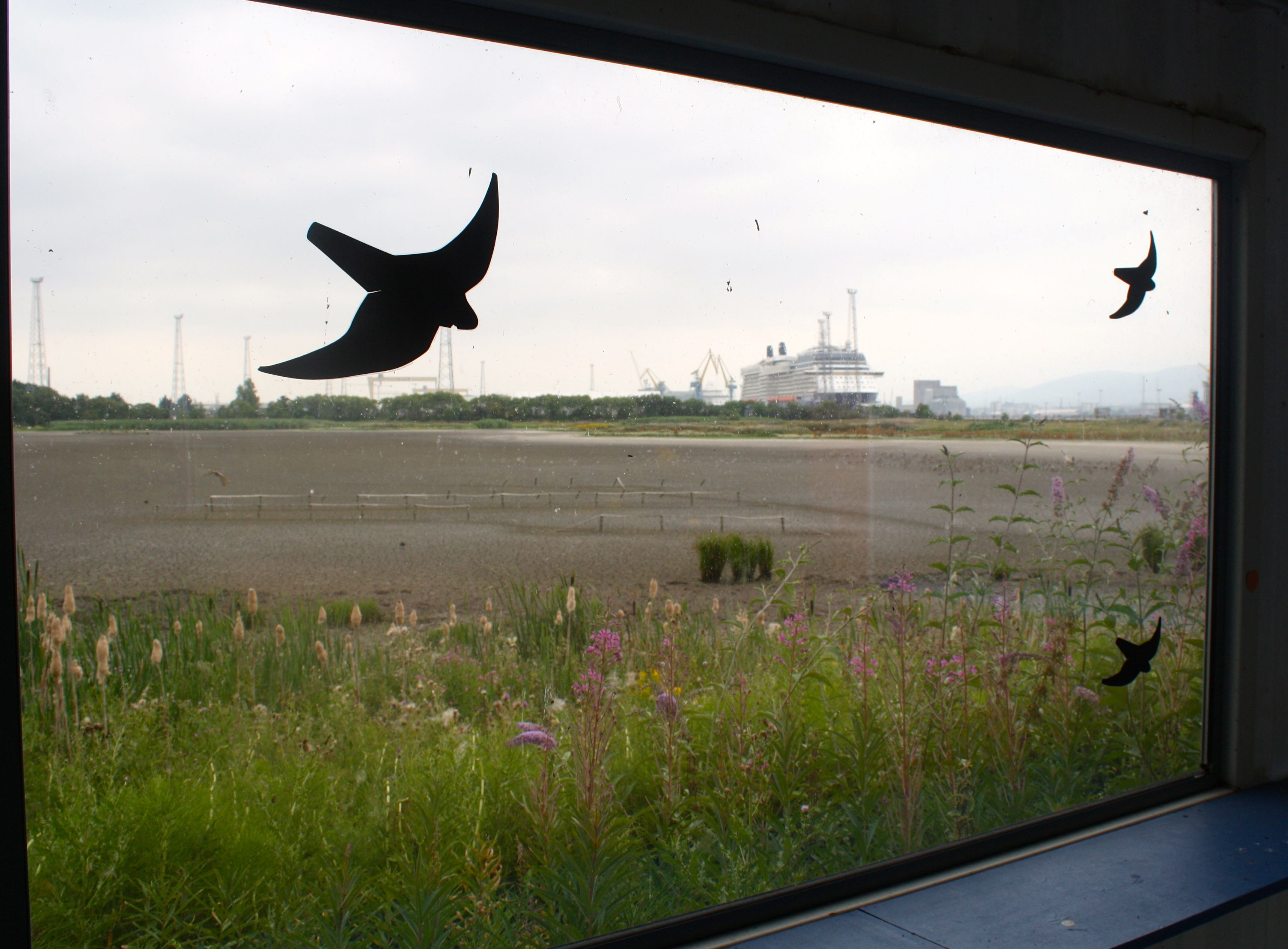 DRIED UP: A window on an arid world at Belfast docks where searing temperatures have turned the lagoon into a desert; below, the Glen Road roundabout has become a valuable haven for pollinators