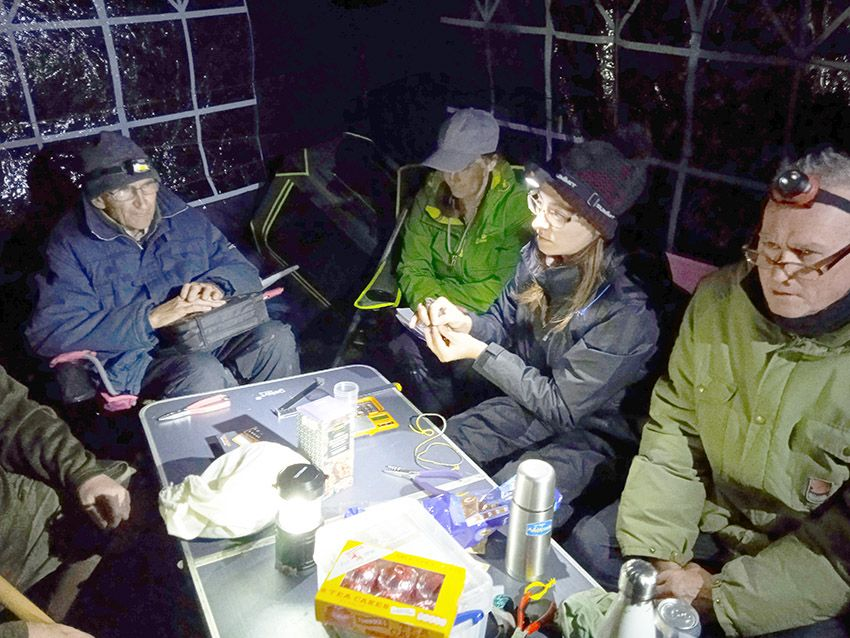HARD AT WORK: Emer Morrison and the team ringing a storm petrel in the dead of night on the Mayor coast; below, a storm petrel about to be released after being ringed – note the webbed feet