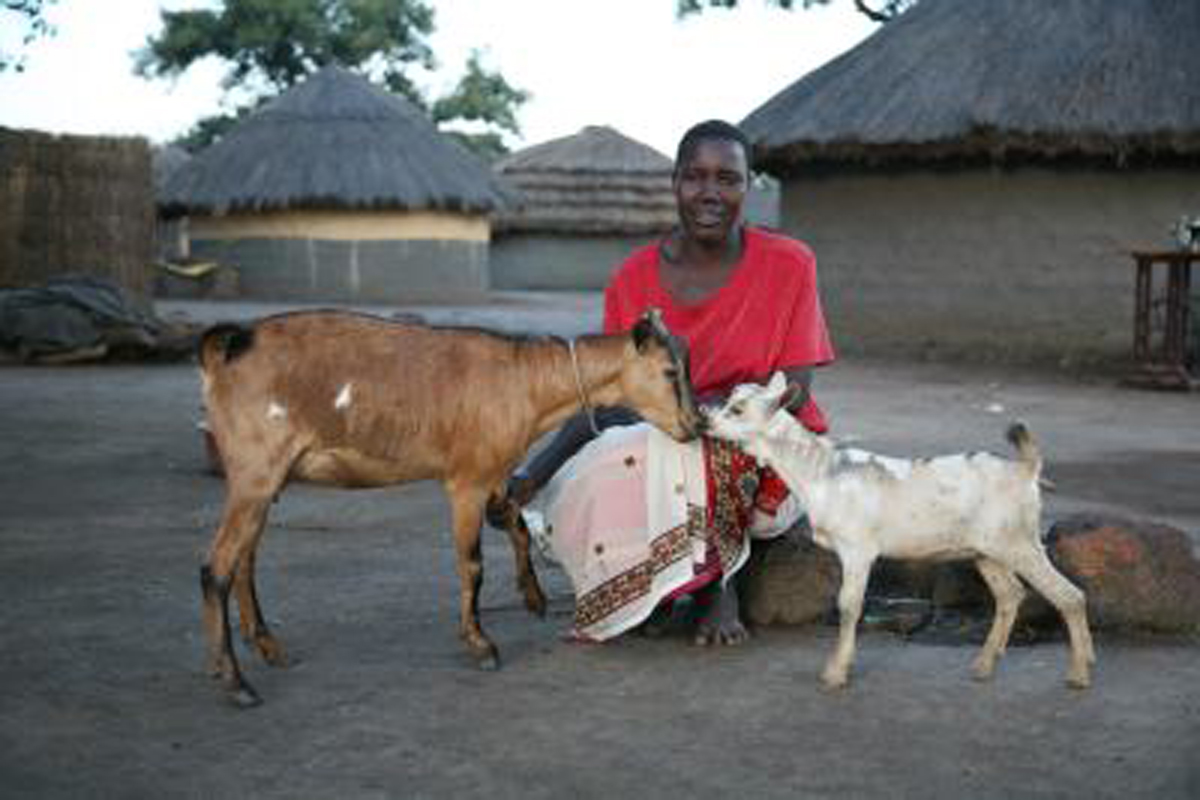 The gift of a goat