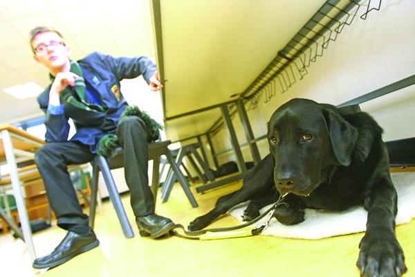 Guide dog de la salle 32011mj17