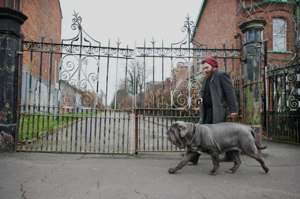 A stroll around the Waterworks for this Neapolitan mastiff will make her day