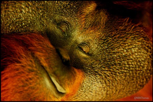 Dublin zoo thomas resized